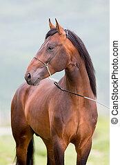 brun bygelhäst, stående, stående