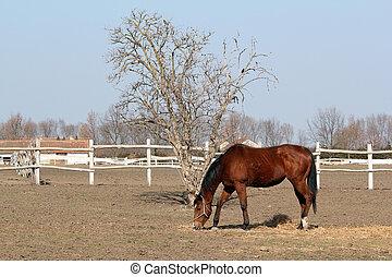 brun, Cheval,  ranch,  scène,  corral
