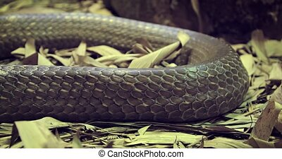 brun, closeup, peau serpent, grand