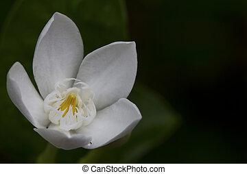 brun, fleur blanche, sur, fond