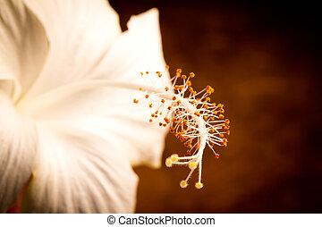 brun, fleurs blanches, sur, fond
