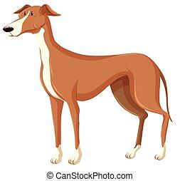 brun, fourrure, chien