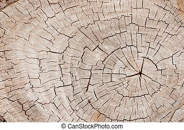 brun, gros plan, vieux, a mûri, arbre, annuel, anneaux, surface, arrière-plan., coffre, toqué