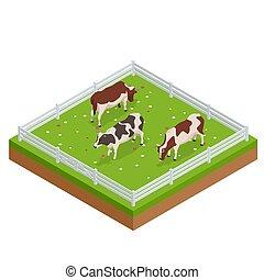 brun, isométrique, herbeux, collection., set., ensoleillé, day., champ, clair, vaches laitières, vaches, blanc