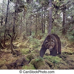 brun, marche, ours