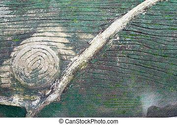 brun, mousse, nature, grand, résumé, arbre, couverture, texture, vigne, arrière-plan vert, branch.