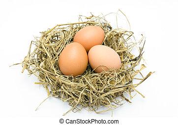 brun, oeufs, dans, a, nid, isolé, sur, a, fond blanc