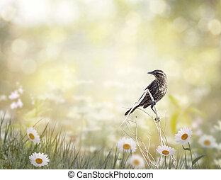 brun, perching, pré, oiseau