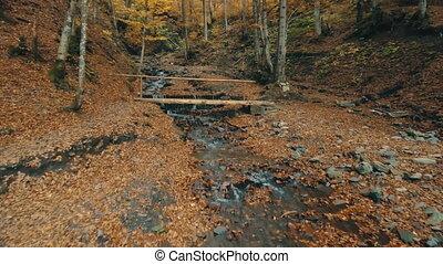 brun, ruisseau, pont, bois, sous, fluxs, mince, rampes