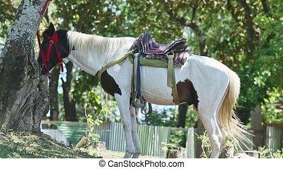 brun, sellé, tacheté, blanc, forêt, cheval, grand, ombre, ...