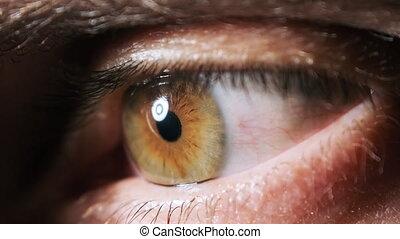 brun, sight., vert, extrême, surprenant, oeil, close-up., ...