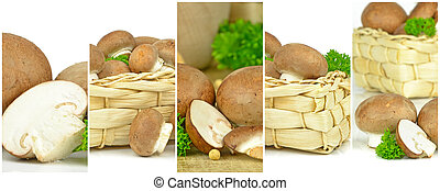 brun svamp, avbildar, in, a, inramat, montage