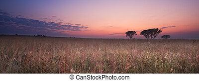 brun träd, morgon, dimma, molnfria, kall, gräs, soluppgång
