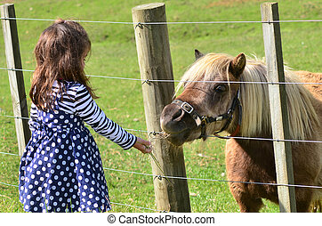 brun, udendørs, pony