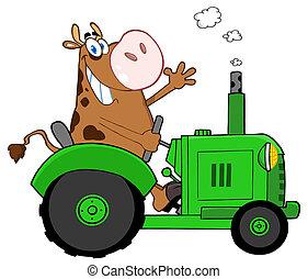 brun, vache, heureux