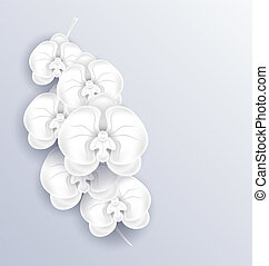 Brunch of beautiful orchids ,paper craft, template with copy spa