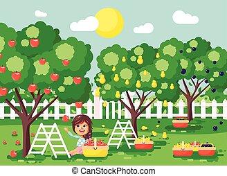 brunette, appel, rijp, scène, oogst, herfst, boompje, buiten, meisje, landscape, weinig; niet zo(veel), plat, volle, tuin, stijl, illustratie, fruit, karakters, kind, zetten, oogsten, spotprent, pruim, boomgaard, peer, vector, mand