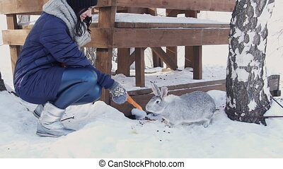 Brunette woman lure fluffy rabbit with carrot in winter farm.