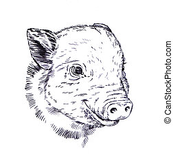 brush painting ink draw pig illustration - black and white...