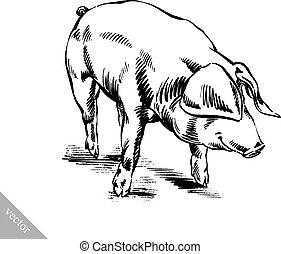 brush painting ink draw pig illustration