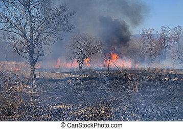 Brushfire 5