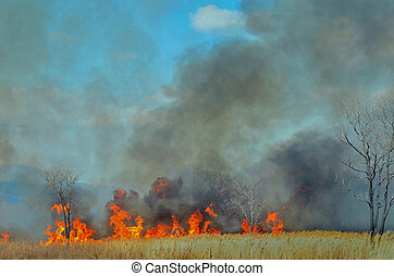 A landscape on brushfire: flame, smoke, ash, trees and sky.