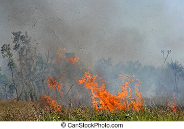Fierce brushfire with red flames and smoke, Kakadu National Park, Australia
