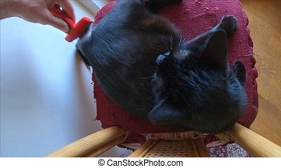 brushing angry cat - SLOW MOTION: brushing fur of a angry...
