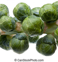 brussel Sprout Stem - Stem or head of uncooked brussel...