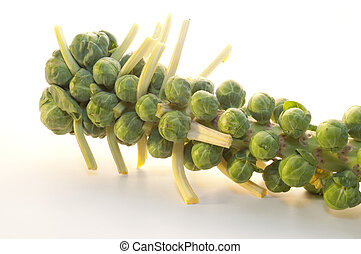 Brussel Sprouts on the stem - Like tiny heads of...