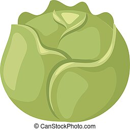 Brussels sprouts vector illustration. - Group of brussel...