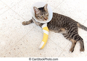 katt brutet ben kostnad