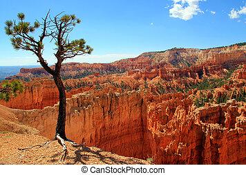 bryce, estados unidos de américa, parque, nacional, utah, cañón