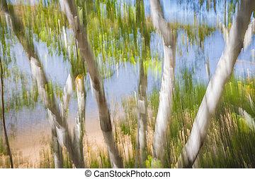 brzeg, jezioro, drzewa, brzoza