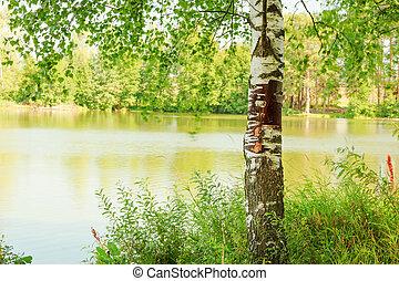 brzeg, las, jezioro