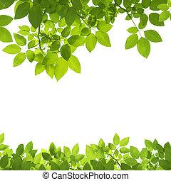 brzeg, liście, zieleń biała, tło