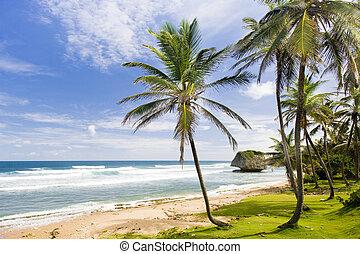 brzeg, wschodni, karaibski, bathsheba, barbados