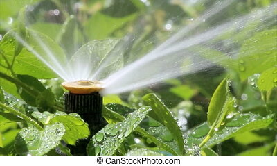 bubller, irrigation, jardin