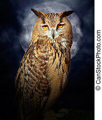 Bubo bubo eagle owl night bird full moon - Bubo bubo eagle ...