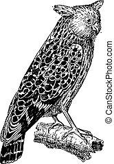 Bubo ketupu or Buffy fish owl, vintage engraving. - Bubo...