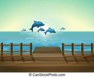 buceo, seis, delfines
