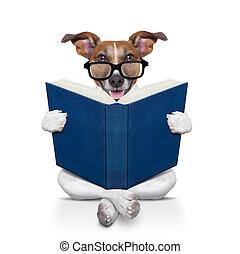 buch, lesende , hund