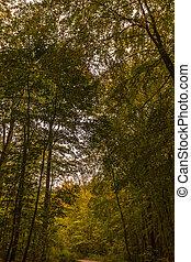 Buchenwald - Natur