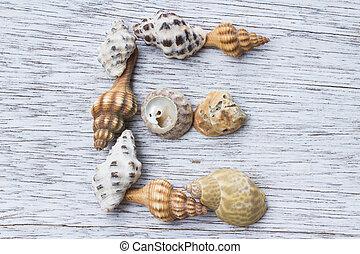 buchstabe e, gemacht, von, seashell