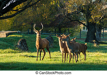 Masterton Deer Park