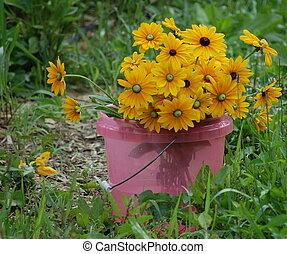 Bucket of Black Eyed Susans