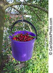 bucket of cherries on a tree