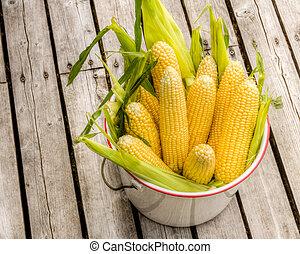 Bucket of fresh yellow sweet corn