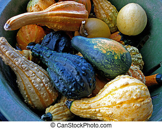Bucket of Gourds - An assortment of warty gourds for Fall ...