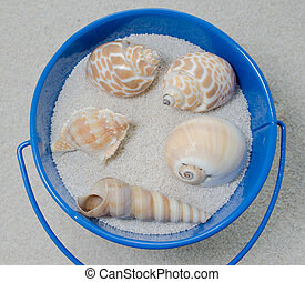 Bucket of Shells